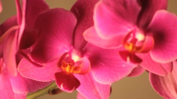 lassan forgó rózsaszín orchidea szirmok