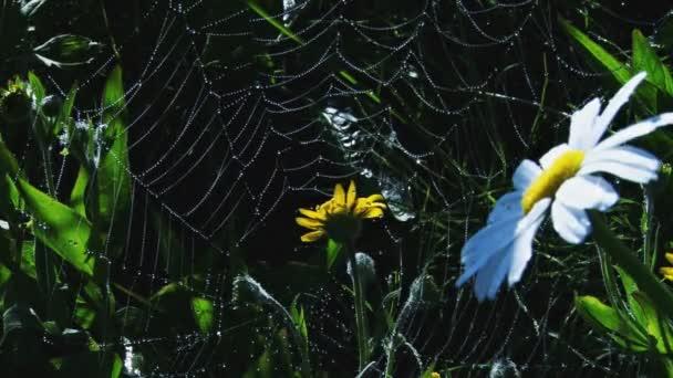 a százszorszépek között pókháló