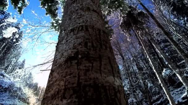 Snow zimní stromy lesa lesní sněhu stromy sníh padá