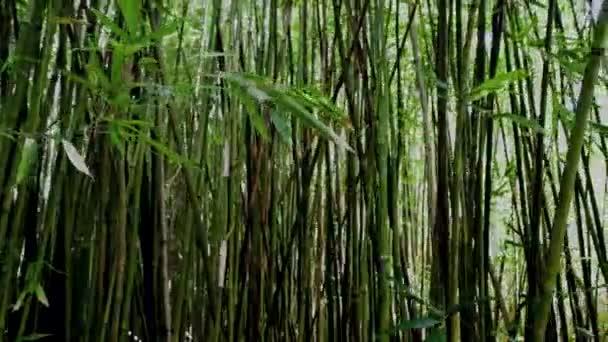 slunce blikající bambusový Les