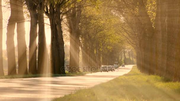sluneční paprsky, sunbeam stromy silueta pozadí zářící světlo příroda fantasy