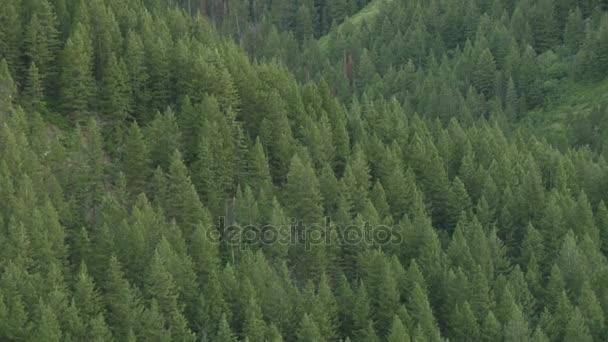 Tilt megjelöl fenyő fa erdei kiterjedésű