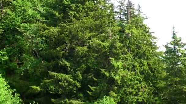 sledování přes vrcholky stromů a lesů