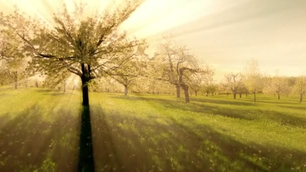 stromy v lese stromy lesní silueta přírodní pozadí