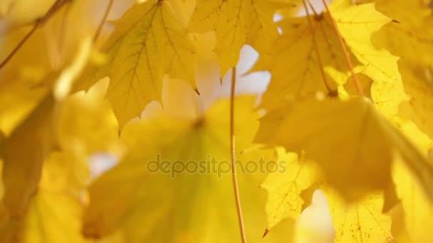 foglie gialle sulla filiale di albero