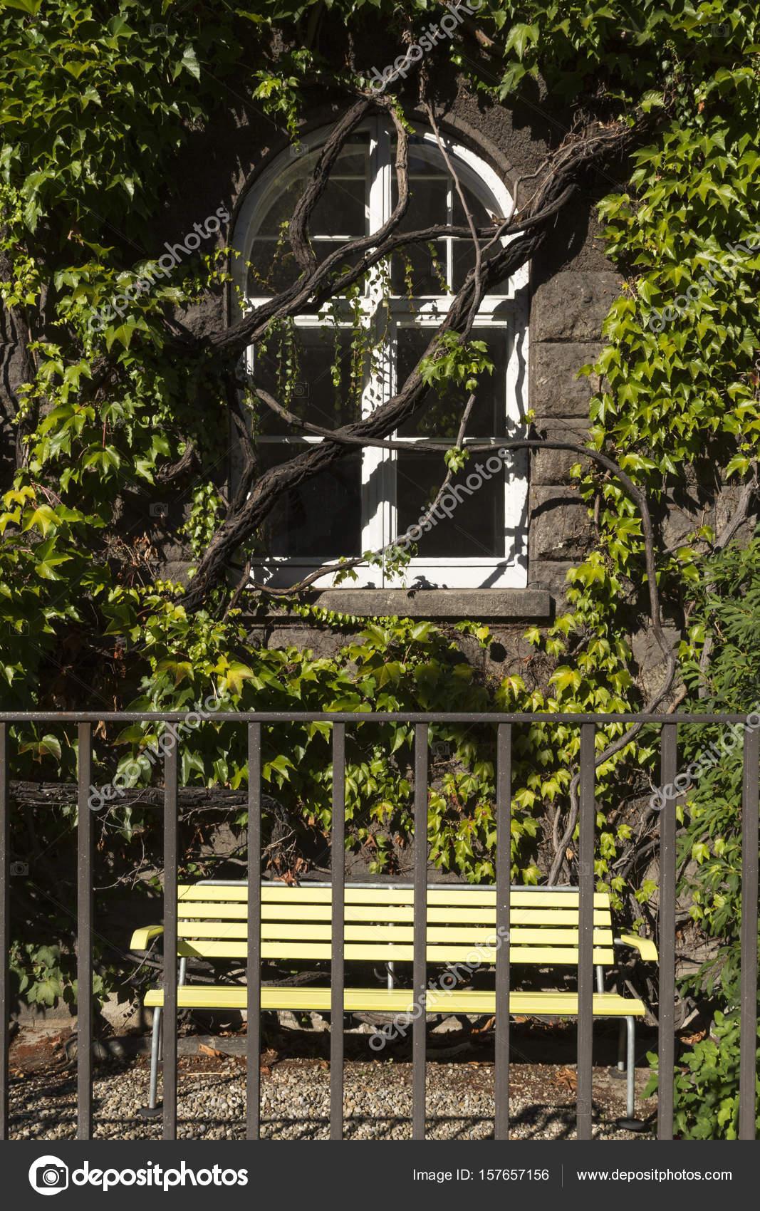 Fenster mit weißem Rahmen und grünen Reben — Stockfoto © arakias ...
