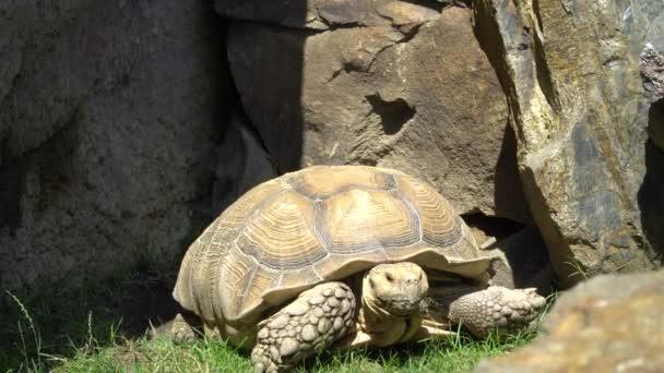 A teknős mozog ott