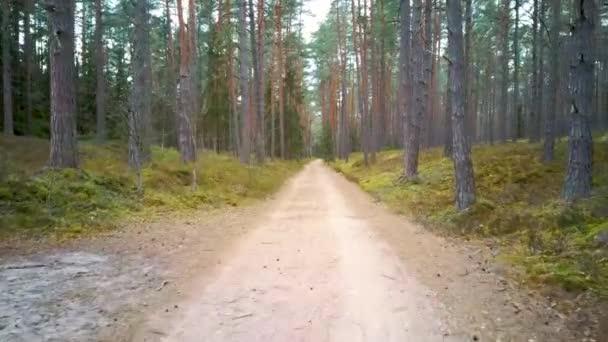 Venkovské Země Road přes krásné hluboké lesy, Evergreen Stromy svěží zelené vegetace, Pov Forward Motion View Sunny Day