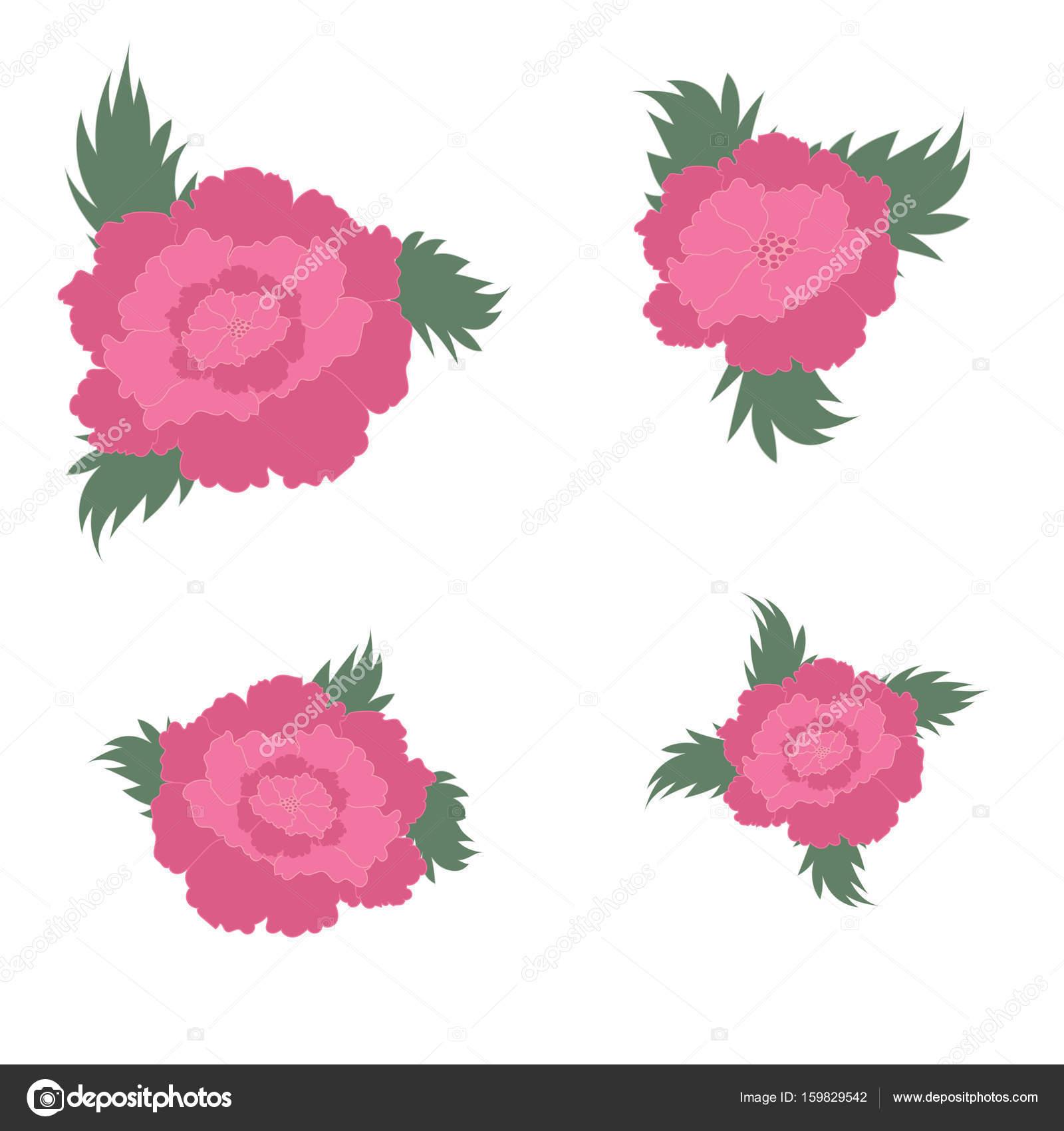 Rosa Pfingstrose Mit Blättern Auf Einem Weißen Hintergrund Zubehör  Hintergrund Hochzeit Einladung Geburtstag Veterans Day Tag