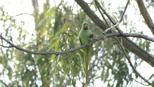 parrot eating nut in park