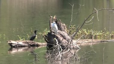 Footage of Birds on a tree in the water
