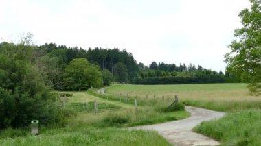 Footpath in hills of Geroldswil