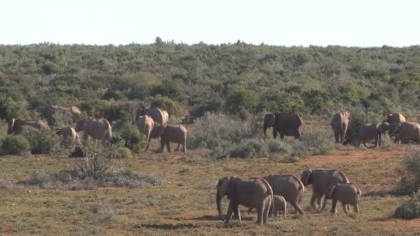 Skupina krásné slonů