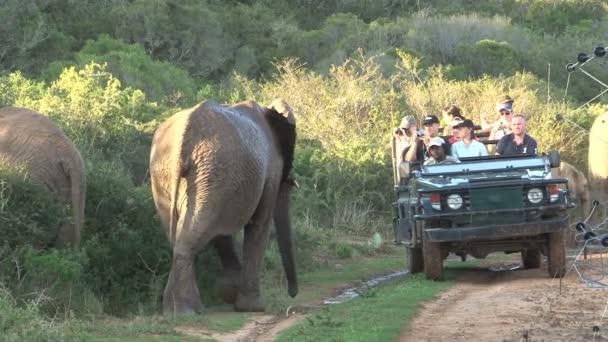 Elefántok szafari Dél-afrikai Köztársaság