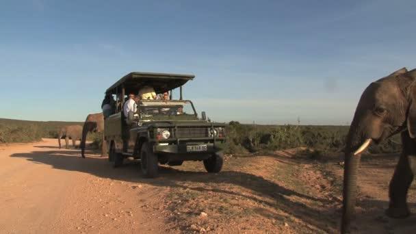 Sloni safari v Jižní Africe