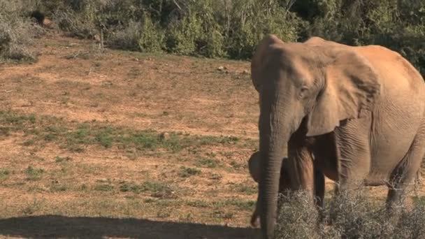 south african elephants
