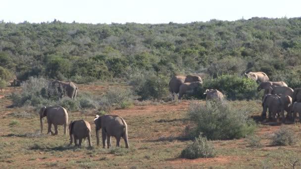 Group of beautiful elephants