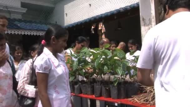 Rybí trh na Srí Lance