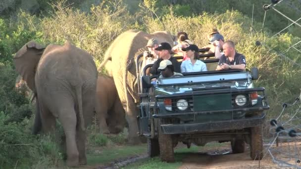 Elephants safari in South Africa