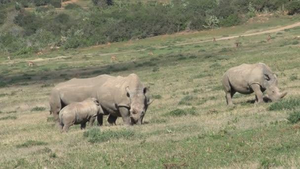 Úžasné volně žijících nosorožců