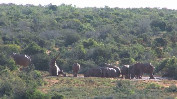 Szép elefánt csoport