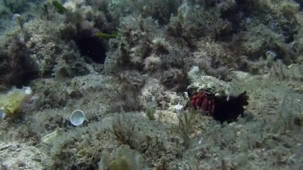 Hermit crabs in Mediterranean sea