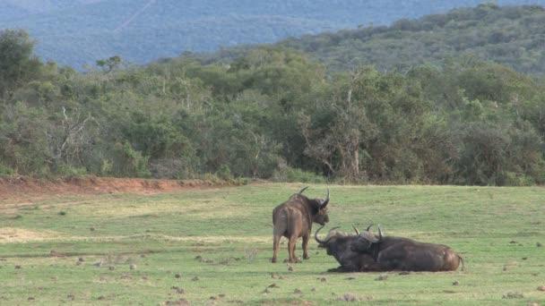 Jižní Afrika přírody