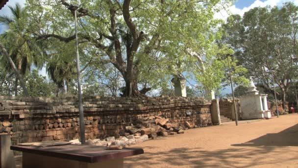 Temple garden in Anuradhapura