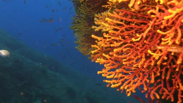 Deep water reefs