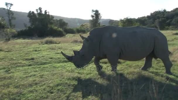 Rhino kolemjdoucí