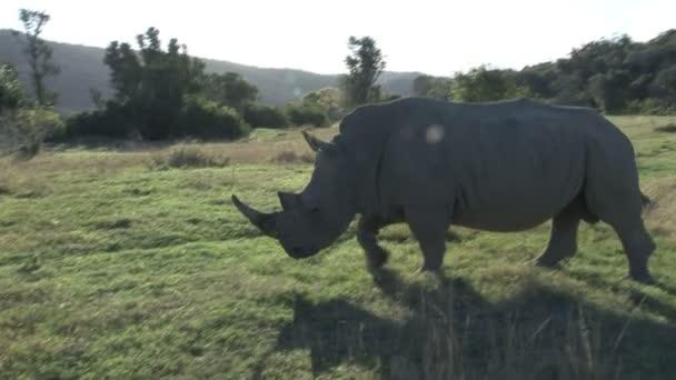 Rhino passing by