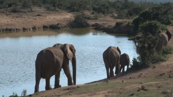 jihoafrický sloni