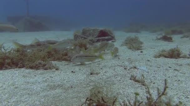 School of fish in Mediterranean sea