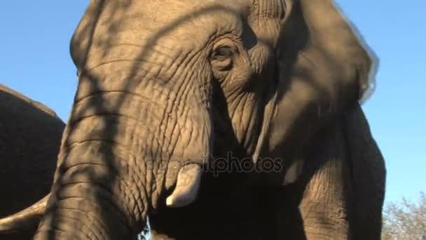 Beautiful elephant close up
