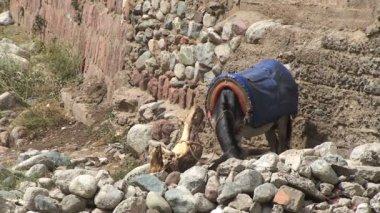 Donkey at Ourika river