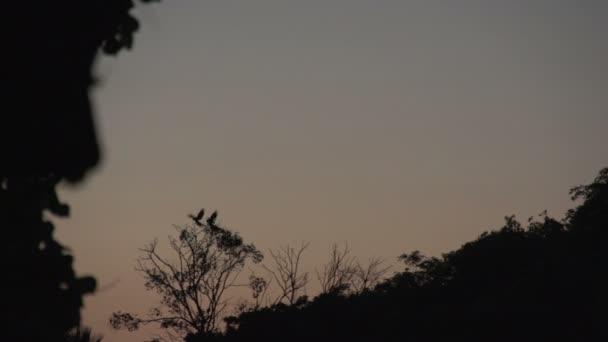 Pantanal, sunset, macaw birds (Ara chloropterus)