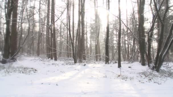 Zimní krajina v Nizozemsku