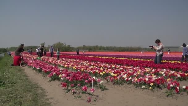 people  walking on flower fields