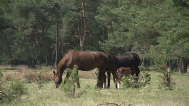 Rodina kůň ve dřevě
