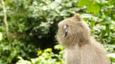 Bolivian monkey sitting on tree