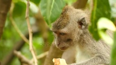 Bolivian monkey sitting on tree