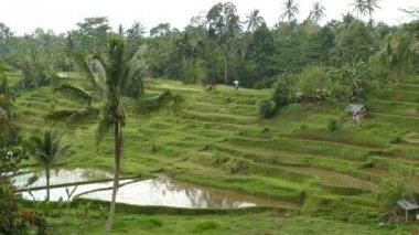 Jatiluwih rice terraces, Tabanan, Indonesia