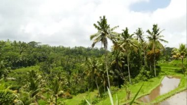 Aerial footage in an amazing landscape of Bali, in beautiful day.