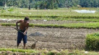 Farmar working in field, Bali