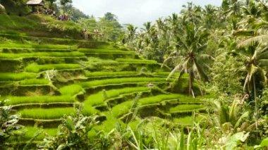 Desa Pakraman rice terrace near Ubud, Bali, Indonesia