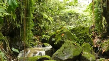 Small waterfall in forest of Ubud near by monkeyforest