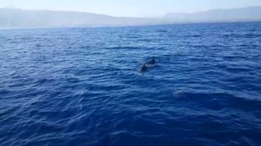 Tourists take photos from dolphins on boat at Lovina, Bali