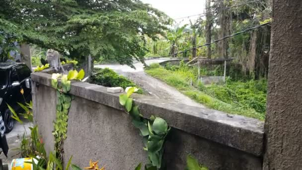 Wild Macaque monkey runs over wall at home in Ubud, Bali