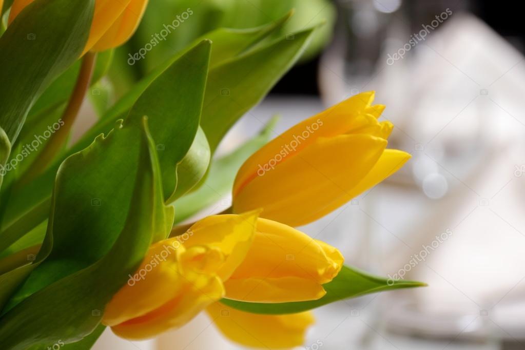 Tulipanes amarillos para pasar unas vacaciones — Fotos de Stock ...