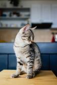 Roztomilá mladá kočka sedí